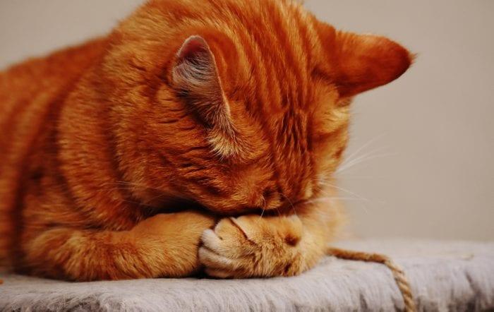 Chová se vaše kočka divně? Možná jste neurotik