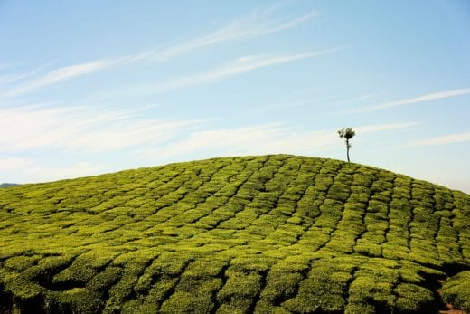 V Indii za vznikem nových zelených ploch stojí intenzivní zemědělství — Unsplash